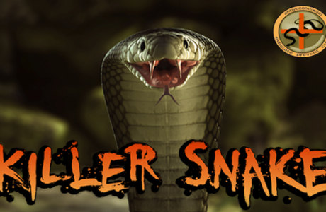 Killer Snake sound