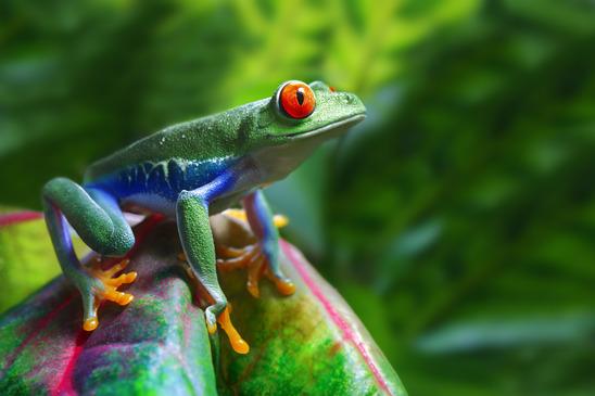 Epic Sound – Guarding The Amazon